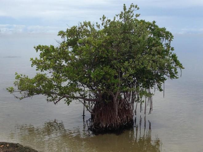 cooltreeinocean