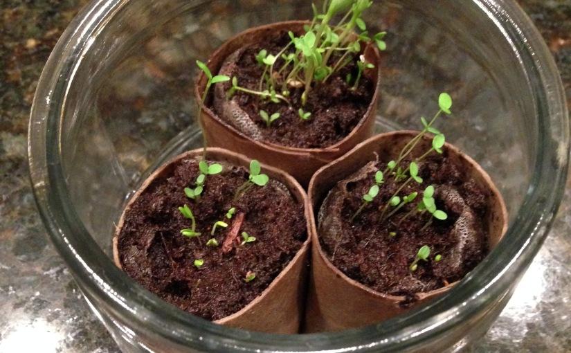 Recycled (or Repurposed) Toilet Paper Rolls – GrowSeedlings